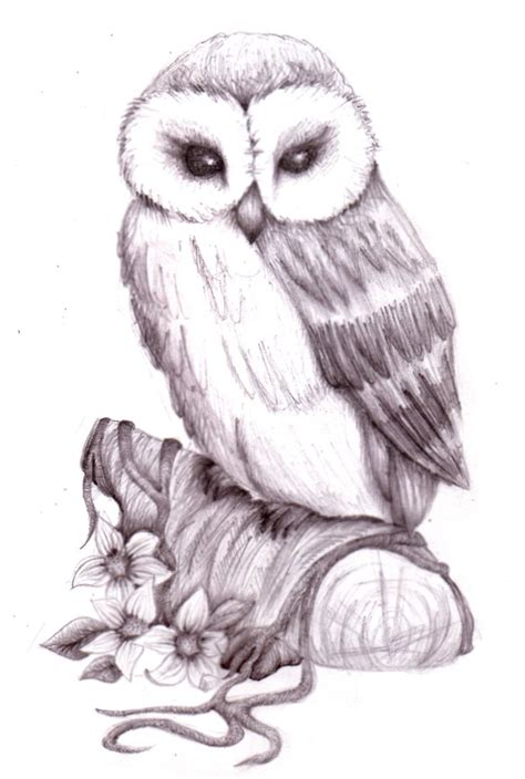 95 Best Owl Images On Animal - 95 best images about owl sketches on