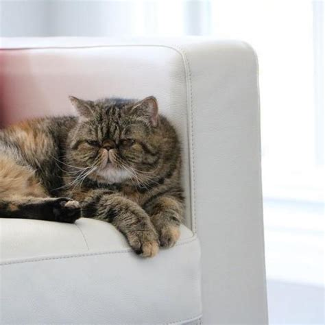 how to stop cat scratching sofa tips to stop a cat from scratching the sofa