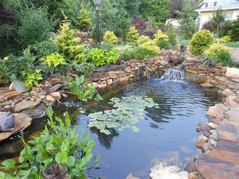 backyard pond construction pond construction backyard koi pond design exles
