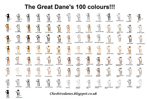 colors of great danes great dane color chart akc codes