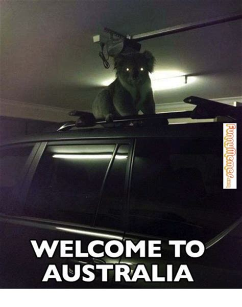 Meme Australia - welcome to australia koala meme image memes at relatably com