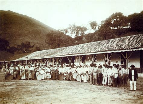 File:Slaves in coffee farm by marc ferrez 1885   Wikimedia Commons