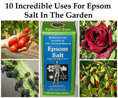 10 uses for epsom salt in the garden