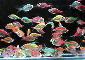 Brackish fish   Acher fish   Mono fish   Scat fish   Brackish fish