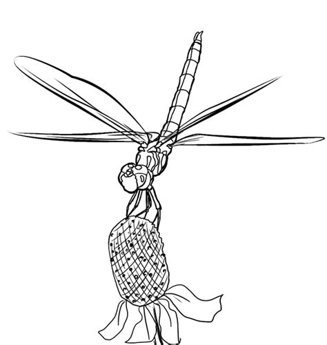 free coloring pages of dragonfly life cycle