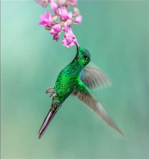 imagenes de flores unicas resultado de imagen para imagenes de flores con colibries