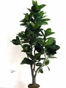 Boston fern plant indoor in addition duckweed lemna minor likewise