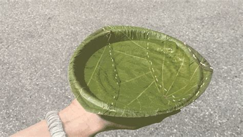 these environmentally responsive recyclable plates are made from leaves