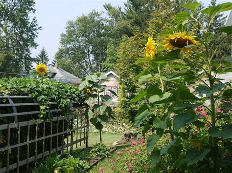 lasagna gardening  easy  productive   garden