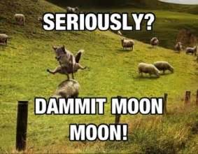 Moon Moon Memes - image 534240 moon moon know your meme