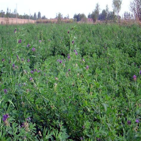 bulk grass seed bulk animal grass seeds for sale buy grass seed bulk