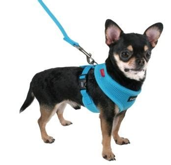 accessories for puppies accessories for your chi chihuahua tips