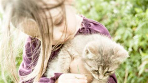 imagenes con vinculos html el v 237 nculo afectivo con los animales