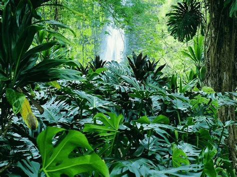 plant in tropical rainforest rainforest plants and animals wallpaper