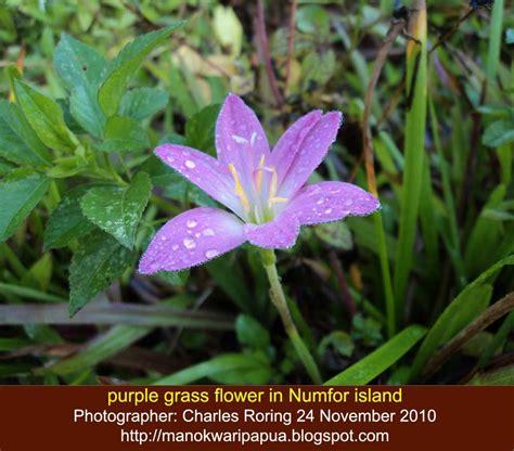 names of plants in the tropical rainforest rainforest tour in manokwari west papua rainforest flowers
