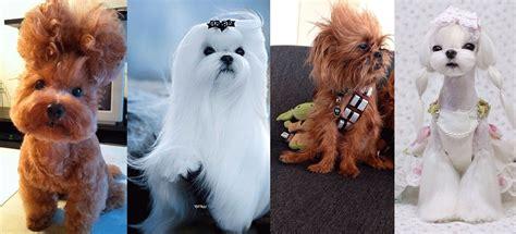 imagenes animales con pelo 4 cortes de pelo para cambiar el look a tu perro el