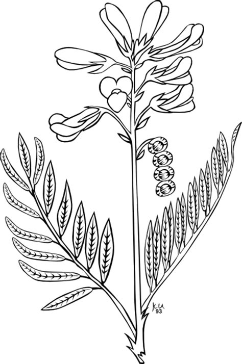 broom tree coloring page plains sweet broom coloring page clip art at clker com