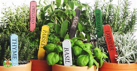 easy steps  growing herbs indoors   herb garden