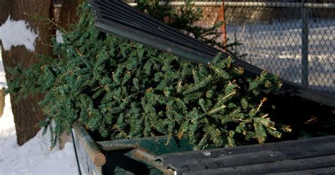 where can i recycle my christmas tree in cambridge