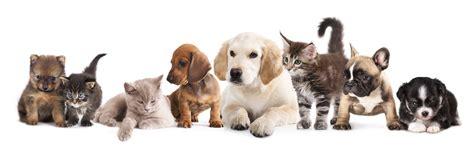 Trixi From The Adoptable Pets Photo Pool by Os Pets Da Petz Saiba Como A Gente Cuida Do Futuro