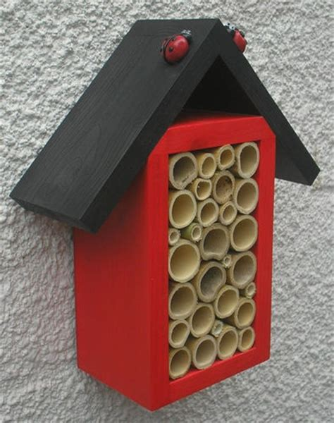 ladybugs in house ladybug house ladies day and house on pinterest
