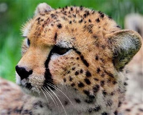 imagenes animales terrestres animales terrestres queanimal com