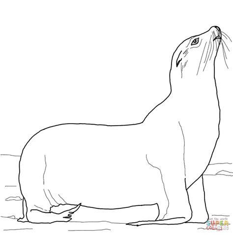 sea lion coloring pages printable california sea lion on a beach coloring page free
