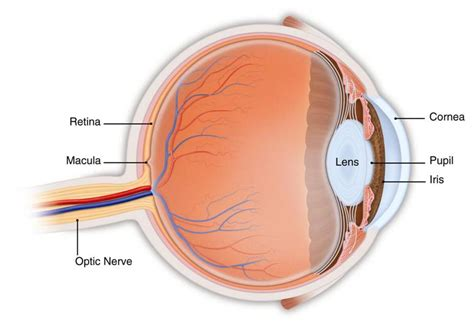 eye lens artificial lens implant to give patients high definition