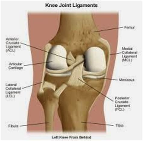 Knee L Aw 5 free physiotherapy clinic knee joint and associated conditions