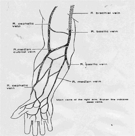 vein diagram of arm benbiceherx veins of arm