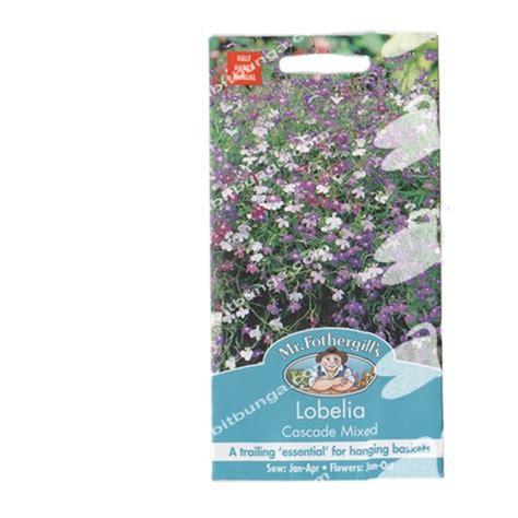 Benih Bunga Mr Fothergills Import Cornflower Blue benih lobelia cascade mixed 1500 biji mr fothergills