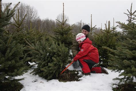 how to make your christmas tree safe for kids simplemost