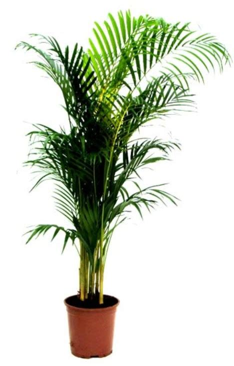 home plant 10 air purifying plants for homes offices webecoist