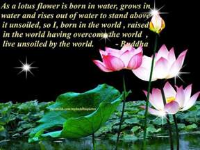 Significance Of Lotus In Buddhism Buddhism Lotus Quotes Quotesgram