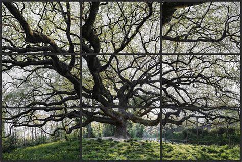 sugli alberi italia quot stabilitas loci quot mostra fotografica degli alberi