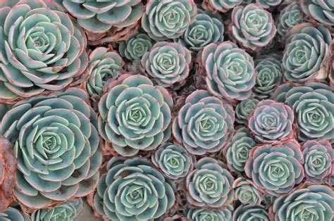 Top 10 Groundcover Plants for Landscaping   Home Wizards