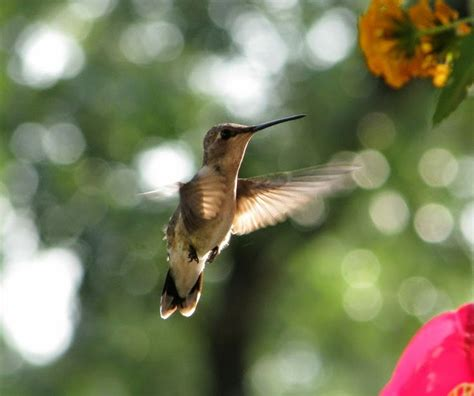 1000 images about hill country birds on pinterest