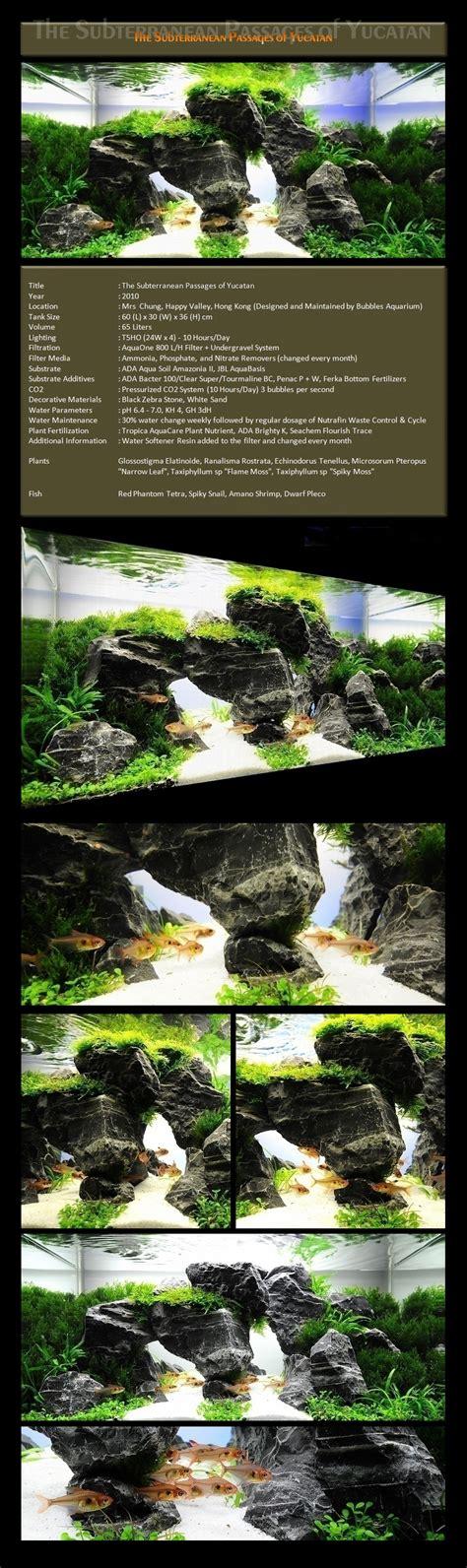 aquascape gallery bubbles aquarium aquascapes 2009 aquascaping gallery