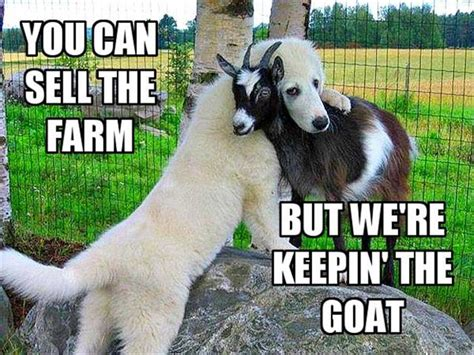 fail lol blog laugh out loud funny pictures and videos pin animal fail lol blog laugh out loud funny pictures and
