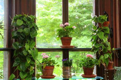 Plants For Window Sills Img 3229