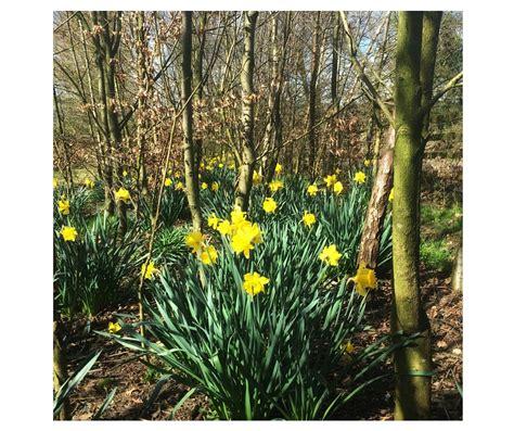 The Tradesmen Gardener gardening for april tradesmen ie blogtradesmen ie