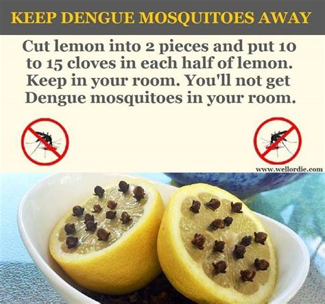 headache joint ache sure shot symptoms you have dengue