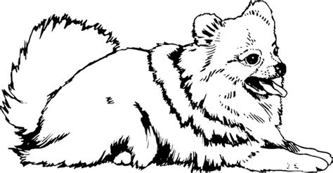 pomeranian free colouring pages