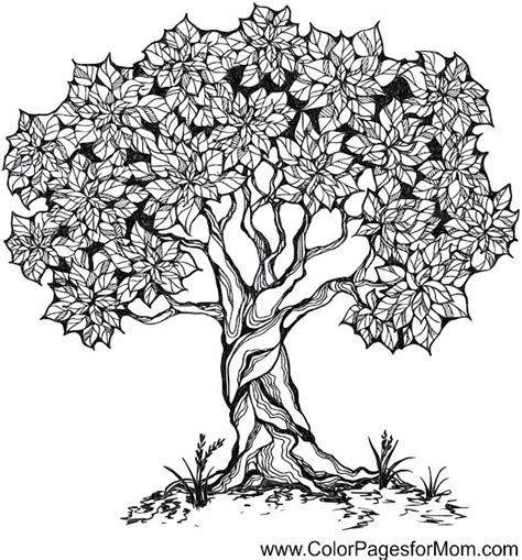 Advanced Coloring Pages Tree 26 Tree Coloring Pages For Adults