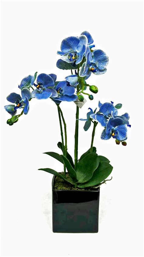 Wreathes get blue phalaenopsis orchid flower