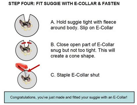 how to a with an e collar glidergossip sugar glider emergency e collar from lgrs