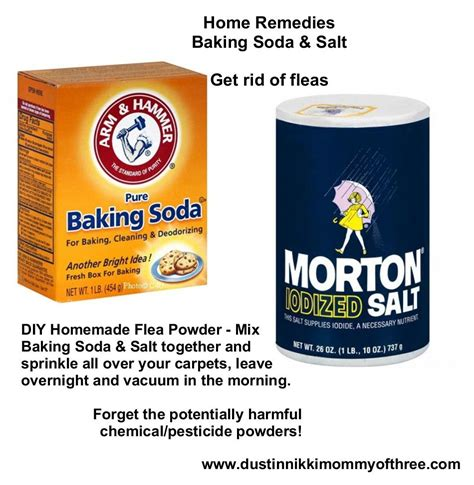getting rid of fleas in house diy flea powder for your home get rid of fleas w o using chemicals pesticides