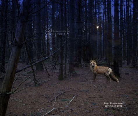 fox woodworking fox in the woods jcchurchman s