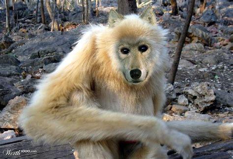 designcrowd wolf wolf monkey worth1000 contests