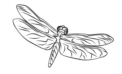 dragonflies coloring pages free dragonfly coloring page animal coloring pages of